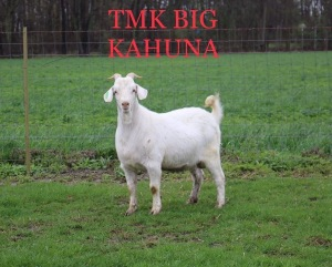 2 straws of TMK Big Kahuna NKR Reg # N18M0199TMK4